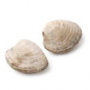 FRESH CLAM SHELL