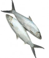 FRESH MILK FISH (MEDIUM SIZE)