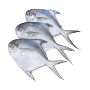 FRESH WHITE POMFRET (SMALL) 200GM